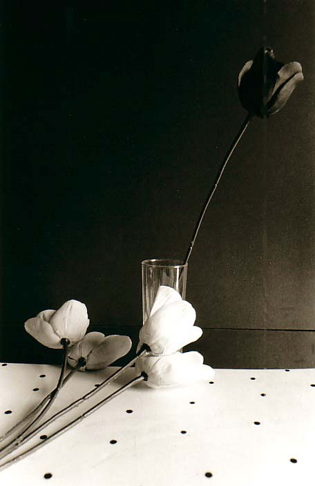 photo michel ducruet, nature morte à la tulipe, still life with a tulip